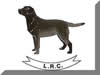 Labrador Retriever Club